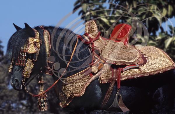 photo cheval fantasia